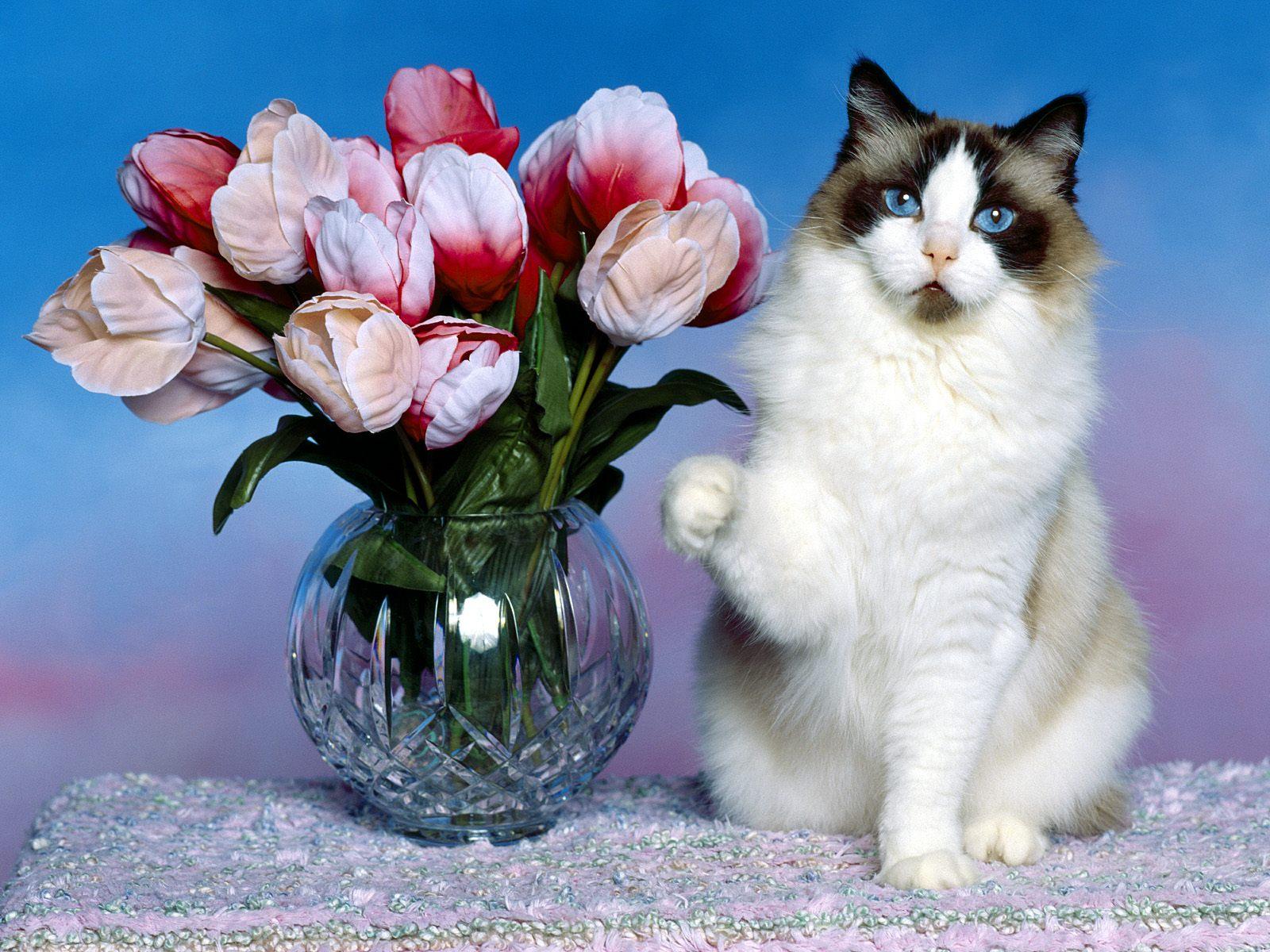 картинки про кошек