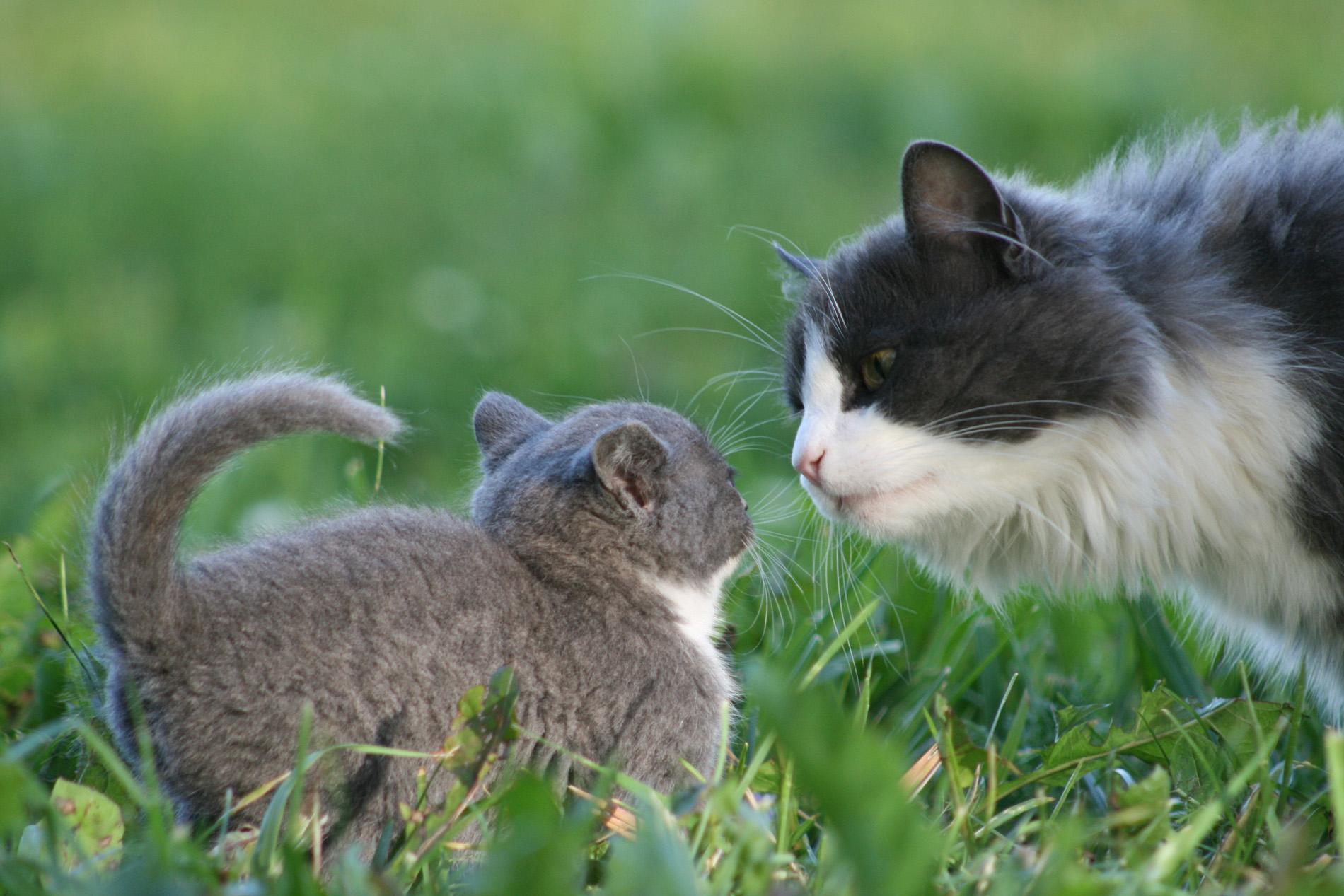 Знакомства кошачьи