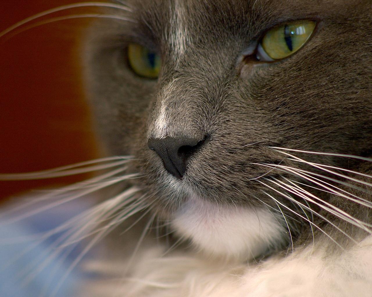 Коты и кошки из балета коты в сапогах - 52240