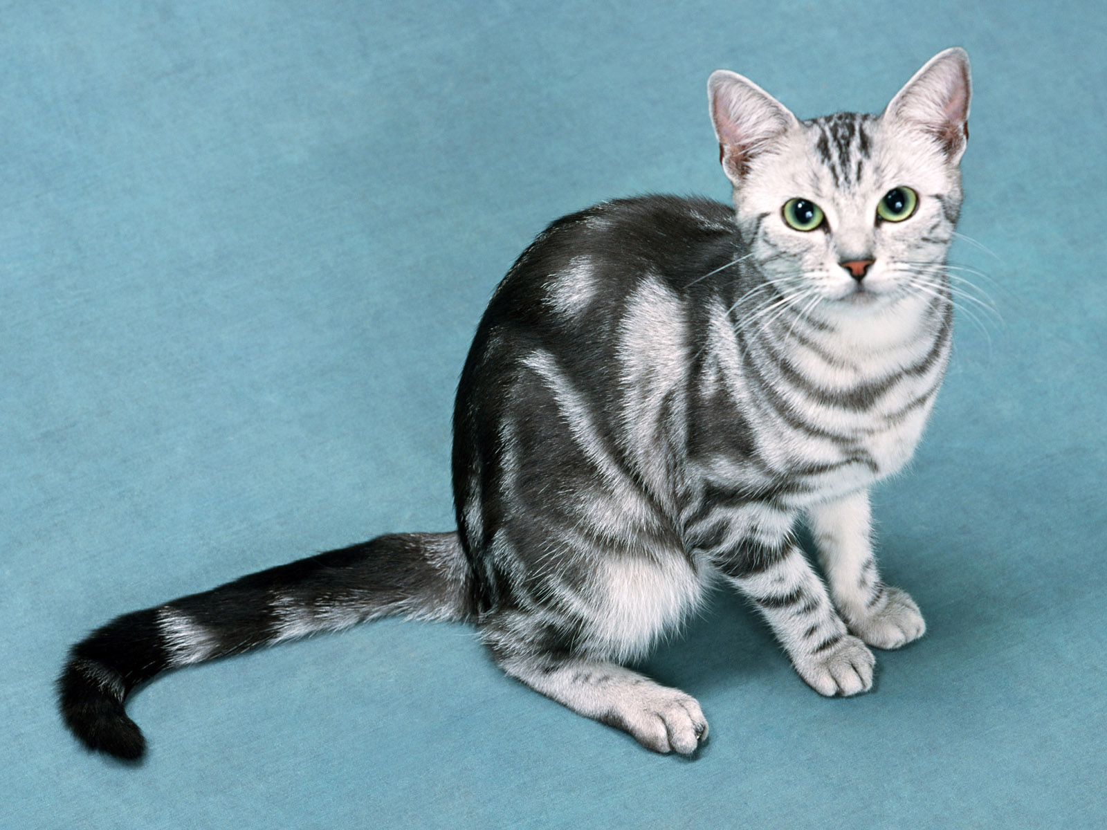 Коты и кошки из балета коты в сапогах - e61
