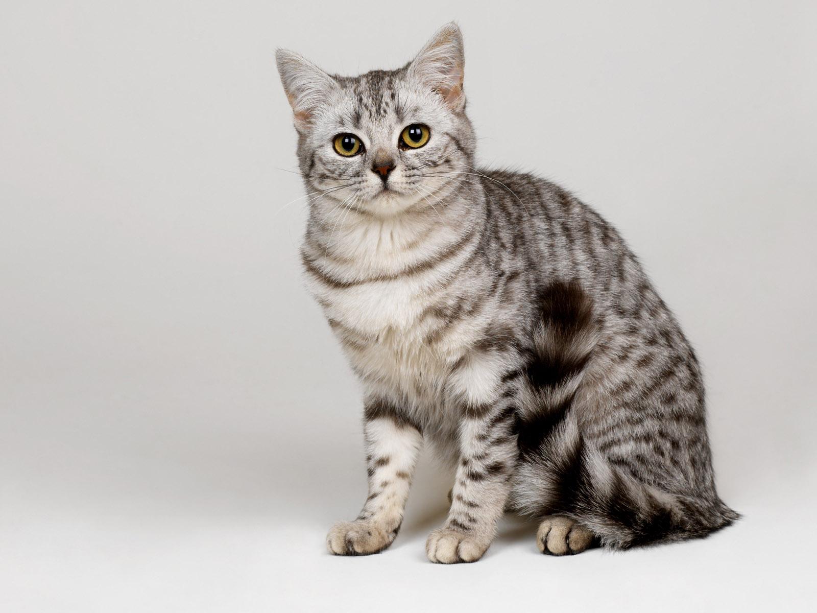 Коты и кошки из балета коты в сапогах - 01da