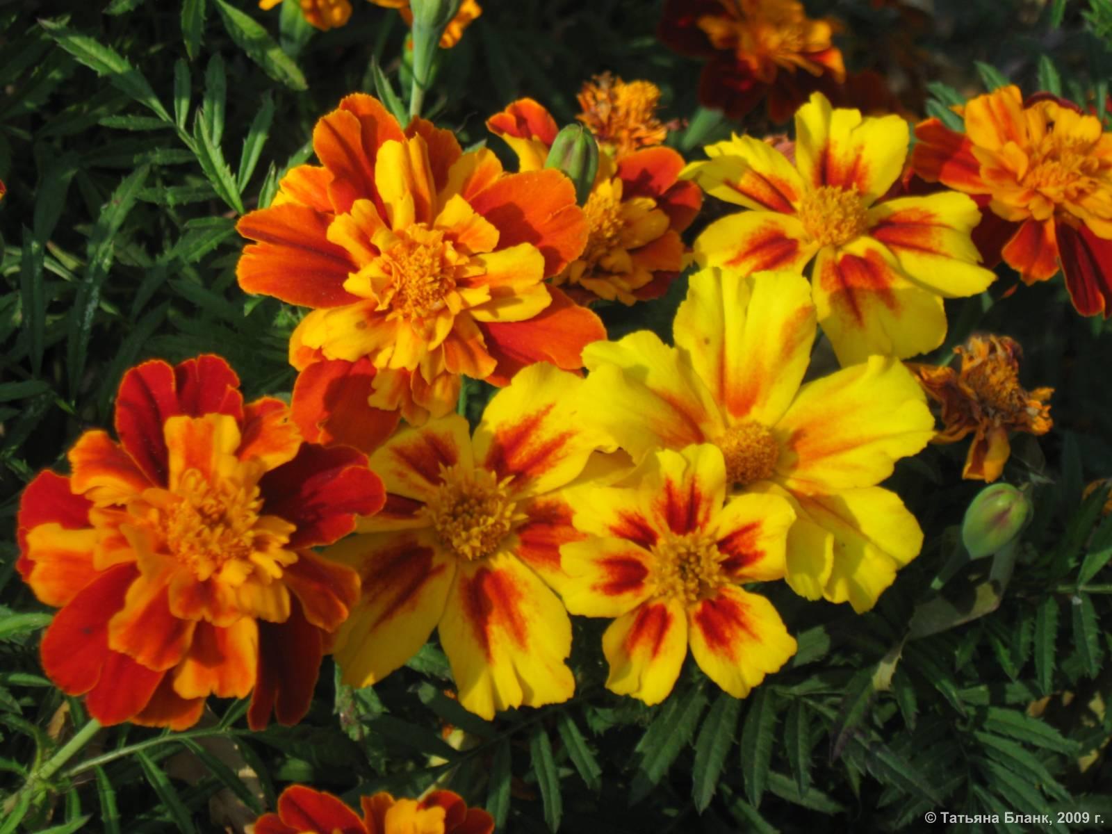 Комнатные цветы фото названия многолетники