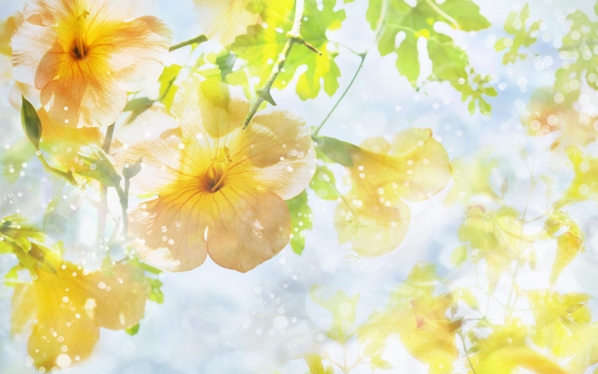 summer flower retro sunshine - photo #15