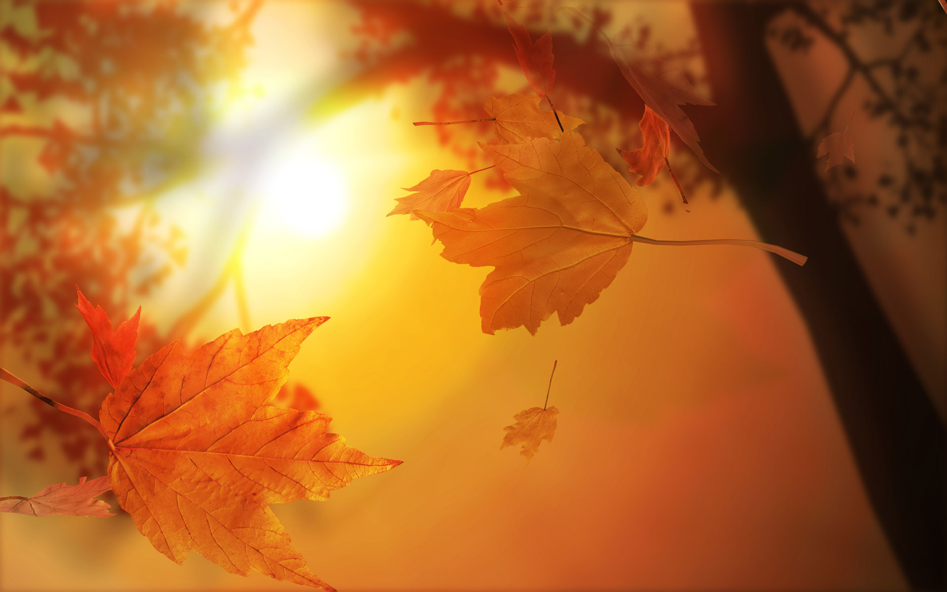 Осенние картинки на рабочий стол самые красивые - b6